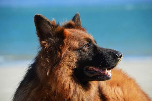 funzione della prostata nel cane de