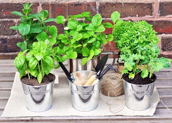 Cosa piantare sul terrazzo o balcone in primavera - Piante aromatiche in casa ...